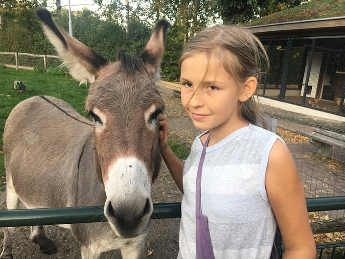 The donkeys are so cute! And here in Zwolle it was obviours, that they were cared for in a good way.