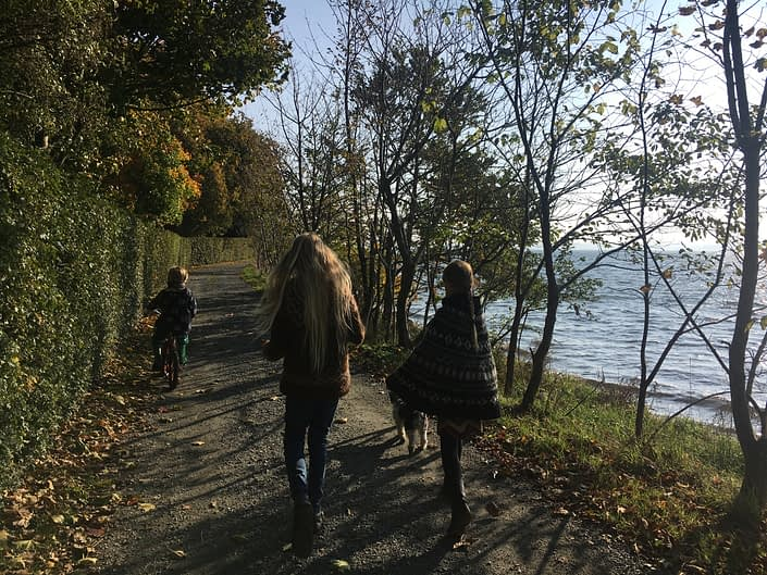 morning walk with forrest on one side and ocean on the other, wind in our faces dogs, leaves falling ...