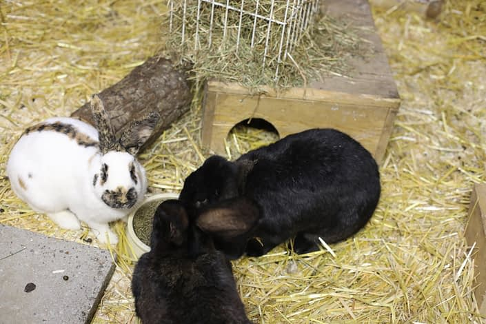 ... and the rabbits